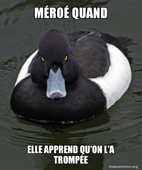 Revenge Duck ( Angry Advice Duck ) meme