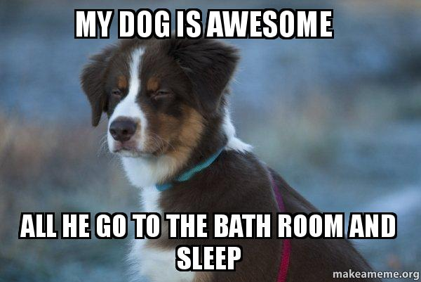 my dog is mmdriw my dog is awesome all he go to the bath room and sleep unsure