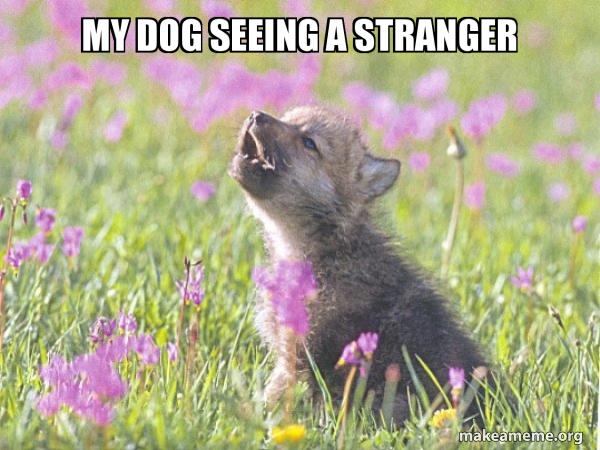 Baby Insanity Wolf meme