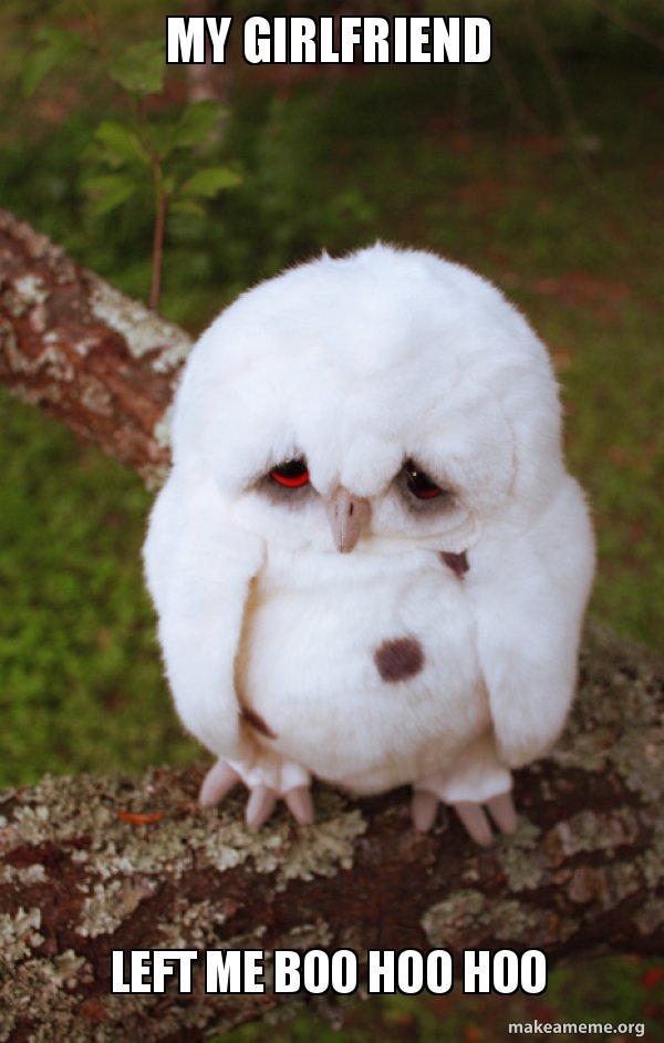 my girlfriend left me boo hoo hoo - Sad Owl   Make a Meme