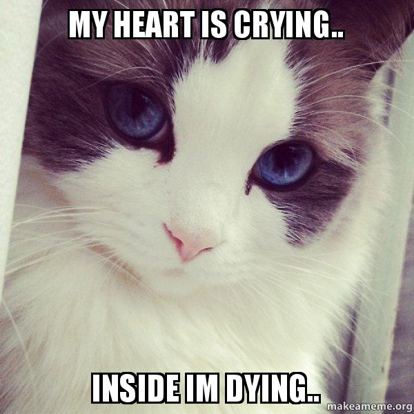 Crying Cat Meme With Hearts | Meme Creation
