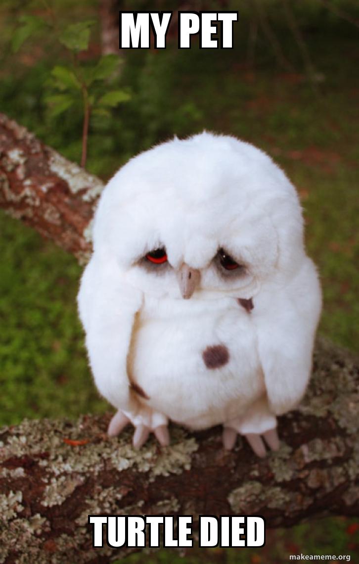 My Pet Turtle Died Sad Owl Make A Meme