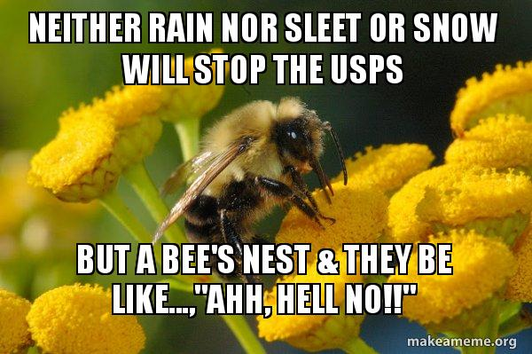 Neither Rain Nor Sleet Or Snow Will Stop The Usps But A Bees Nest