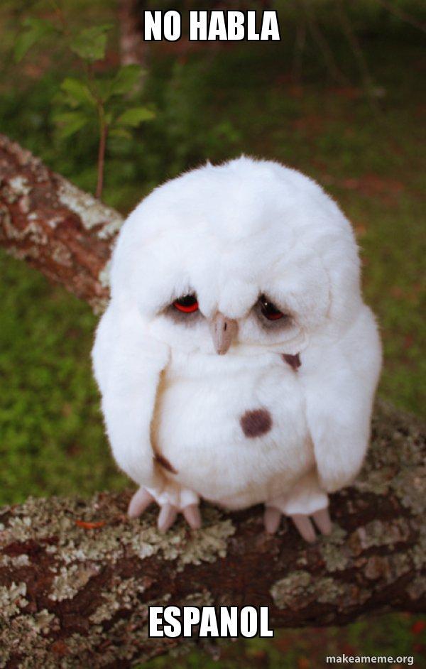 No Habla Espanol - Sad Owl | Make a Meme