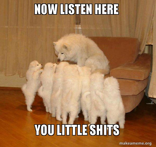 now listen here l8wfbi now listen here you little shits storytelling dog make a meme