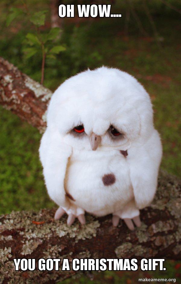 Oh Wow You Got A Christmas Gift Sad Owl Make A Meme