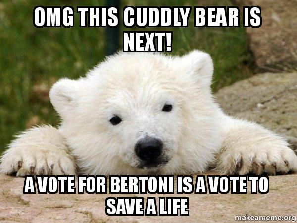 omg this cuddly omg this cuddly bear is next! a vote for bertoni is a vote to save