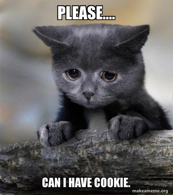 Kitten Please Meme