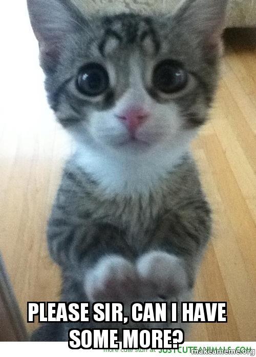 Kitty Cat Cute Eyes