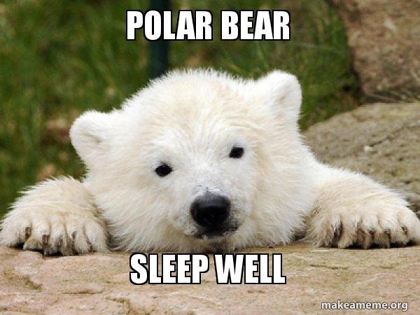 Polar Bear Sleep Well Popular Opinion Bear Make A Meme