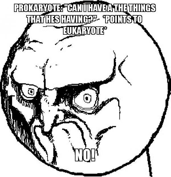 Prokaryote: