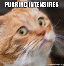 purring intensifies purring intensifies make a meme