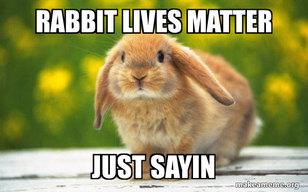 Regretful Rabbit meme