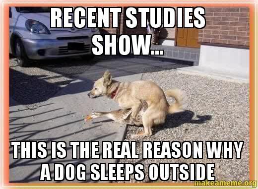 Dog Sleeping On Bed Meme