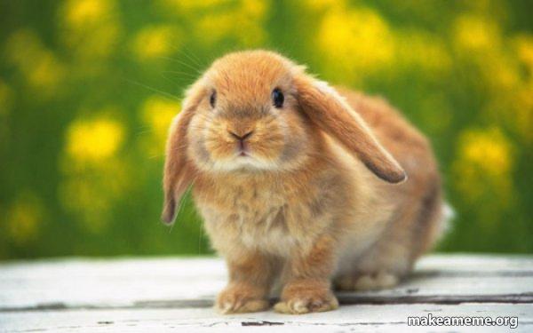 Regretful Rabbit meme