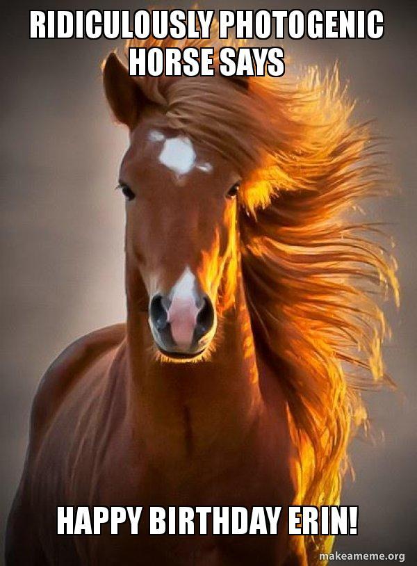 happy birthday erin meme Ridiculously photogenic horse says HAPPY BIRTHDAY ERIN  happy birthday erin meme