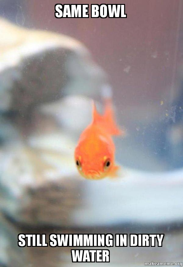 Same bowl Still swimming in dirty water - Grumpy Fish   Make a Meme