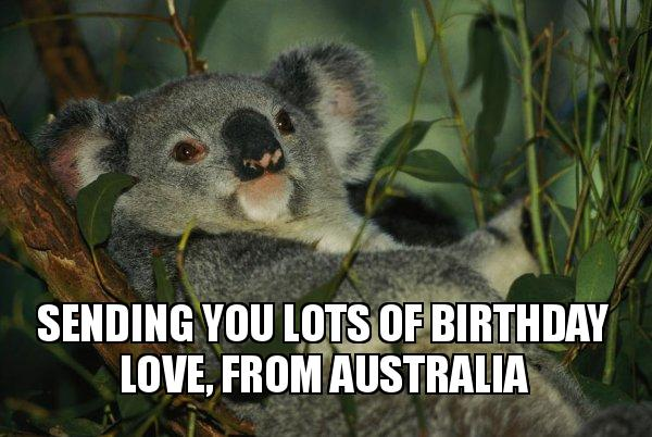 Sending You Lots Of Birthday Love From Australia Laid Back Koala