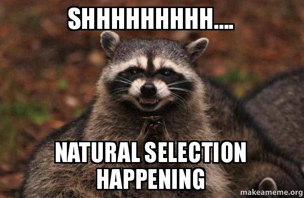 [Image: shhhhhhhhh-natural-selection.jpg]
