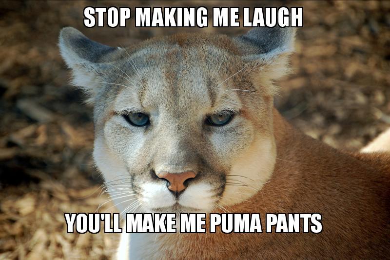 cb6453fe800d stop making me laugh you ll make me puma pants - puma pants
