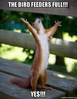 the bird feeders the bird feeders full!!! yes!!! happy squirrel make a meme