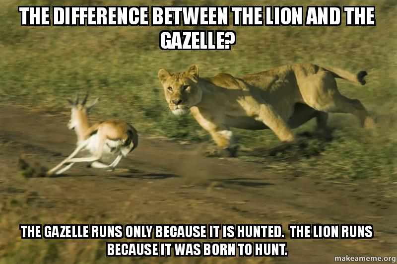 the difference between gib8wy the difference between the lion and the gazelle? the gazelle runs,Gazelle Meme