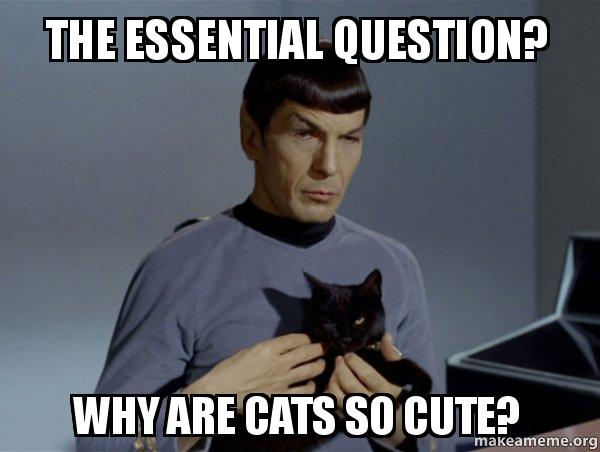 Why You So Cute Meme The essential question...