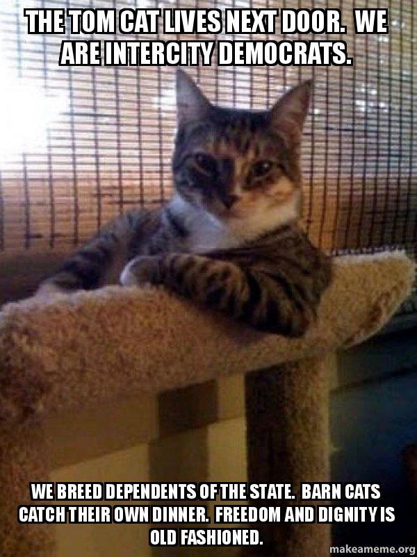 The Tom Cat Lives Next Door We Are Intercity Democrats