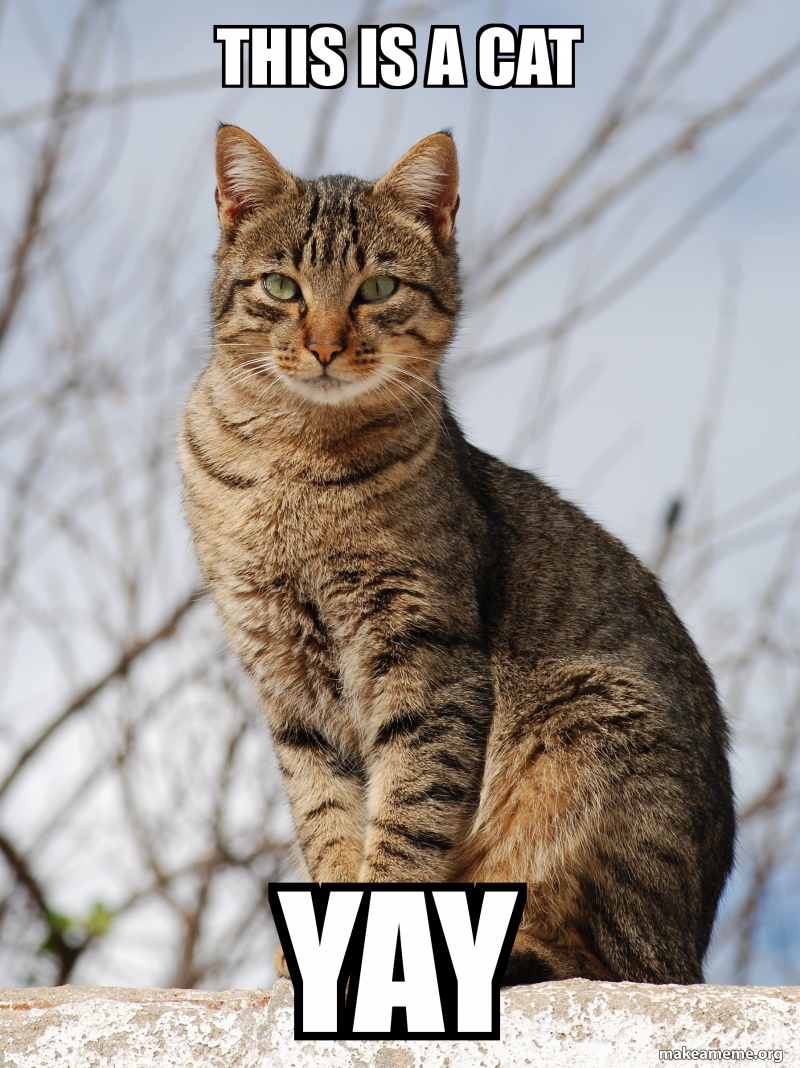 This Is A Cat Yay Make A Meme When you get popular and have your own movie for pulling a lever 1.4563 10287 wkronks first meme yay. make a meme