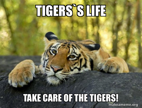 Confession Tiger meme
