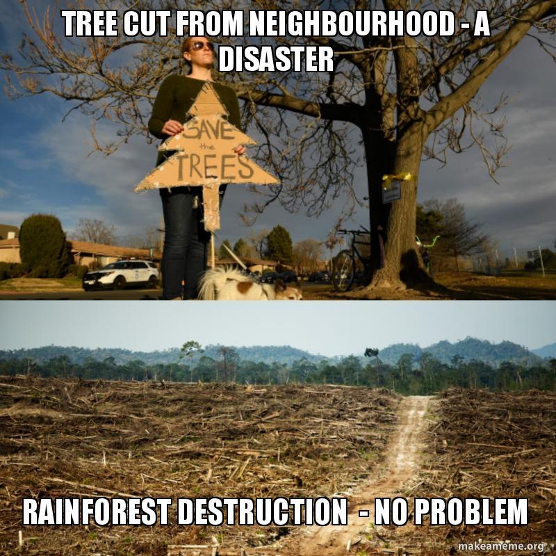 Tree cut from neighbourhood - a disaster Rainforest destruction - no
