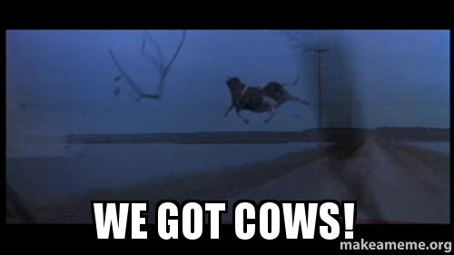 We got cows! Make a Meme