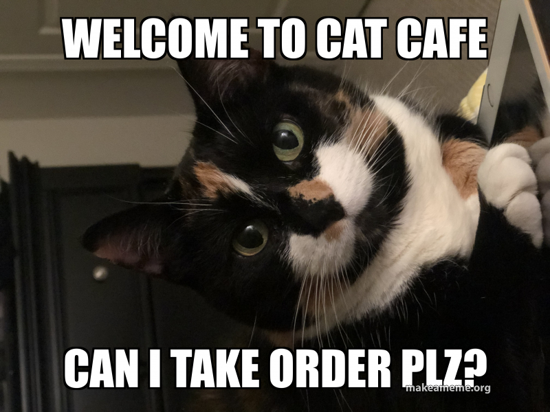 Image result for cat cafe meme