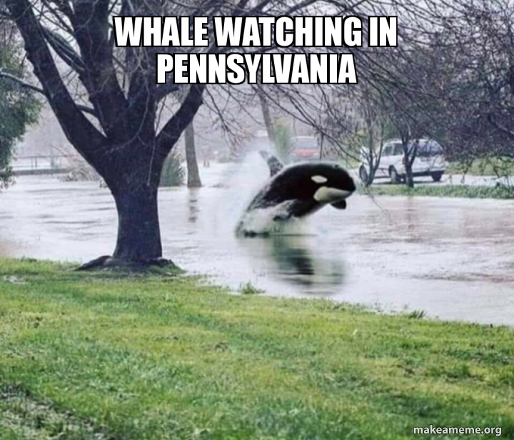 Whale Watching In Pennsylvania Make A Meme