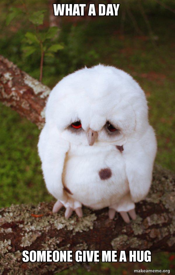 What A Day Someone Give Me A Hug Sad Owl Make A Meme