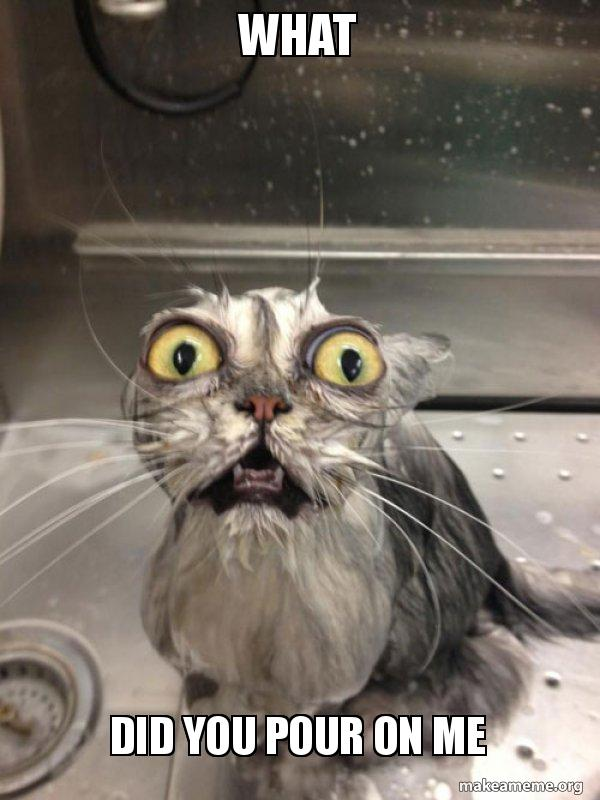 What Did You Pour On Me Cat Bath Make A Meme