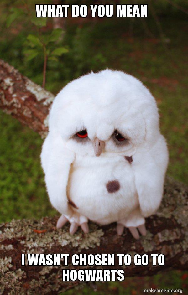 What Do You Mean I Wasn T Chosen To Go To Hogwarts Sad Owl