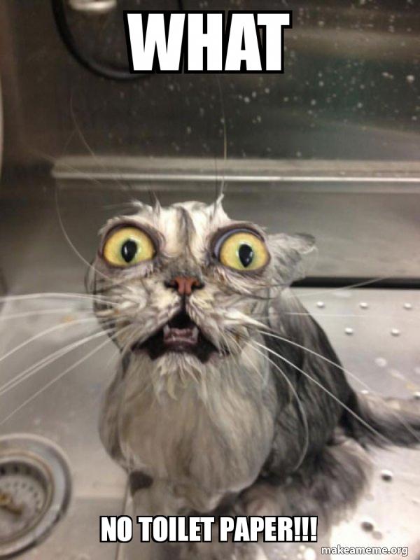 Cat bath meme