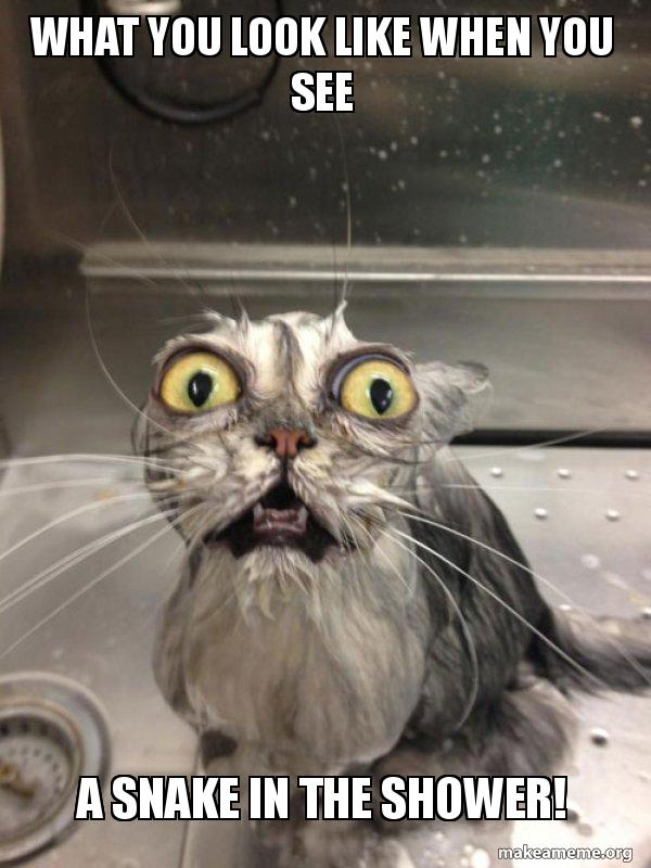 What you look like when you see a snake in the shower! - Cat