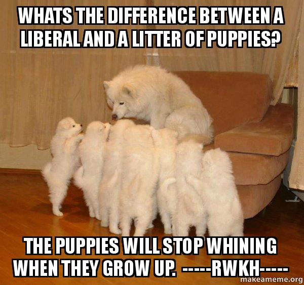 Stop Dog Whining