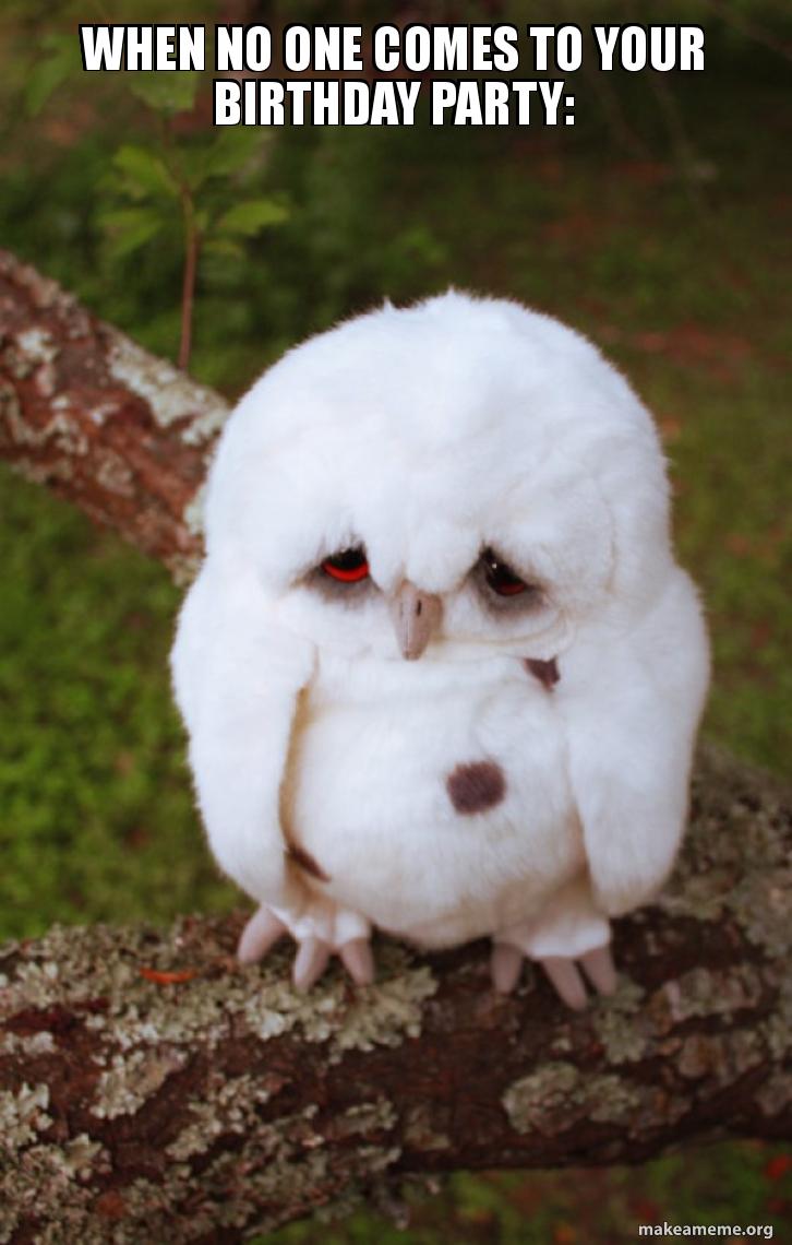 Sad Owl meme