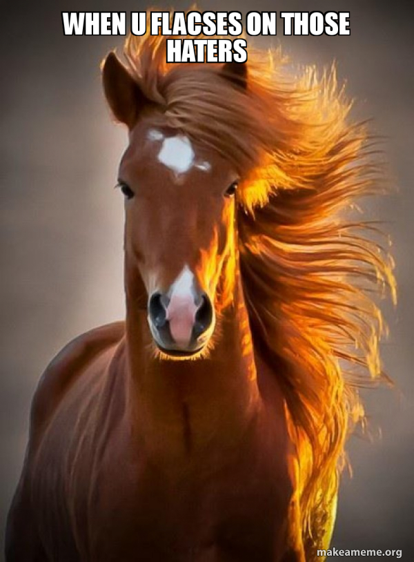 Ridiculously photogenic horse meme