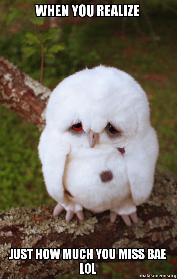 when you realize 2pxwdr when you realize just how much you miss bae lol sad owl make a meme