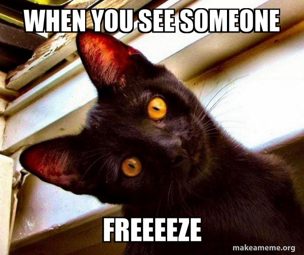 Overly Attached Cat meme