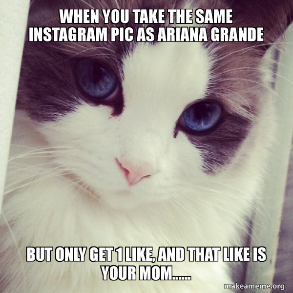 Ridiculously Photogenic Cat meme