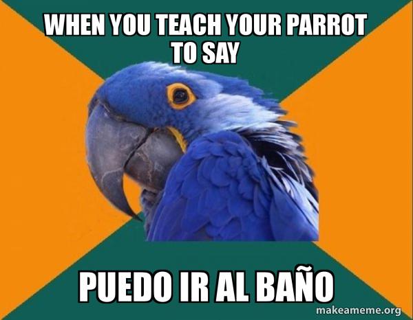 Paranoid Parrot meme