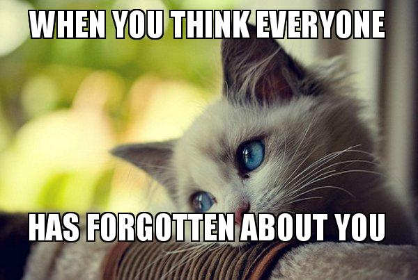 First World Cat Problems meme