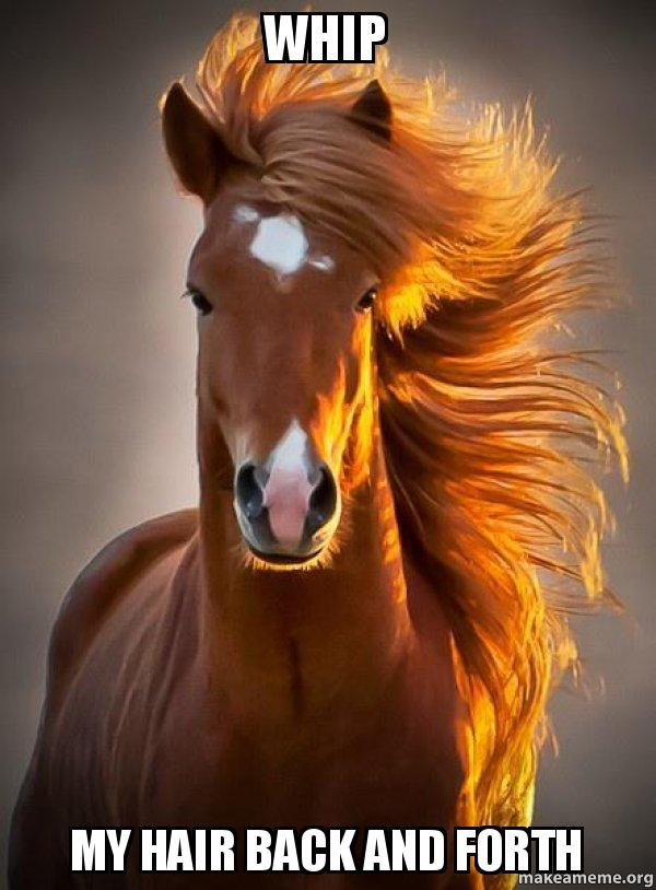 whip my hair whip my hair back and forth ridiculously photogenic horse make