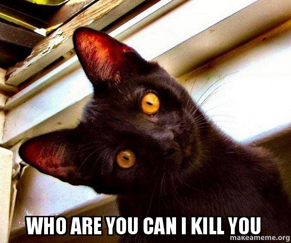 Who Are You Can I Kill You Overly Attached Cat Make A Meme