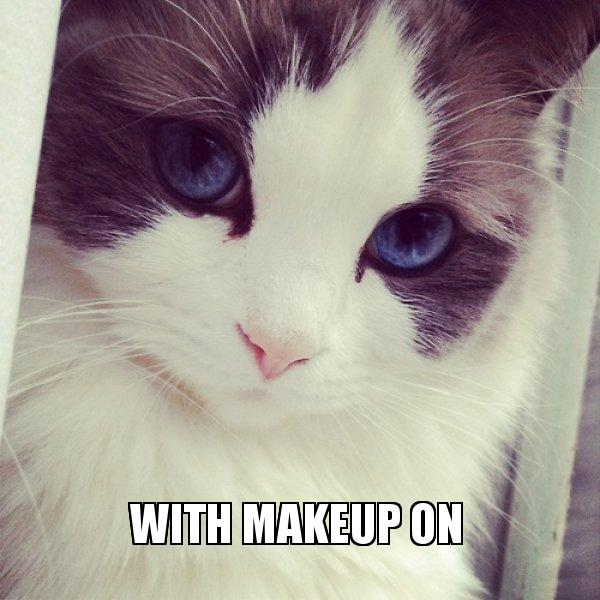 With Makeup on - Ridiculously Photogenic Cat   Make a Meme